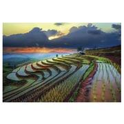 Cuadro Arrozal Multicolor Impresion en Lienzo 3 x 120 x 80 cm