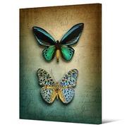 Cuadro Mariposas Sobre Lienzo 100 x 140 cm