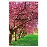 Cuadro Arboles Flores Rosa Fotoimpresión en Cristal 80 x 120 cm