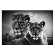 Cuadro Pareja de Leones Fotoimpreso en Cristal 120 x 80 cm