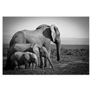 Cuadro Familia de Elefantes Fotoimpreso en Cristal 120 x 80 cm