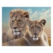 Cuadro Leones Fotoimpresión en Lienzo 3 x 100 x 80 cm