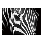 Cuadro Fotoimpresión Zebra en Lienzo 3 x 120 x 80 cm