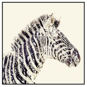 Cuadro Impresión de Cebra en Papel 2,5 x 80 x 80 cm