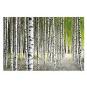 Cuadro Fotoimpresión Bosque en Cristal 1,2 x 120 x 80 cm