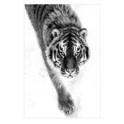Cuadro  Foto Impreso Tigre Cristal 0,4 x 80 x 120 cm