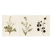 Cuadro Plantas Impreso 28,9 x 39 cm
