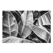 Cuadro Hojas Foto Impreso en Cristal 0,4 x 120 x 80 cm