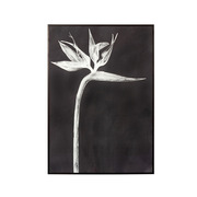 Cuadro Ave Paraíso Negro 2,5 x 50 x 70 cm