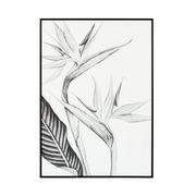 Cuadro Ave Paraíso Blanco y Negro en Lienzo 2,5 x 50 x 70 cm